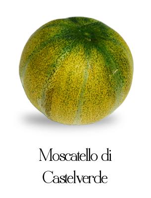 melone moscatello di castelverde