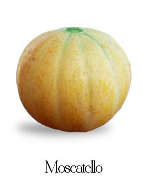 melone moscatello