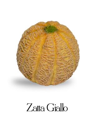 melone zatta giallo